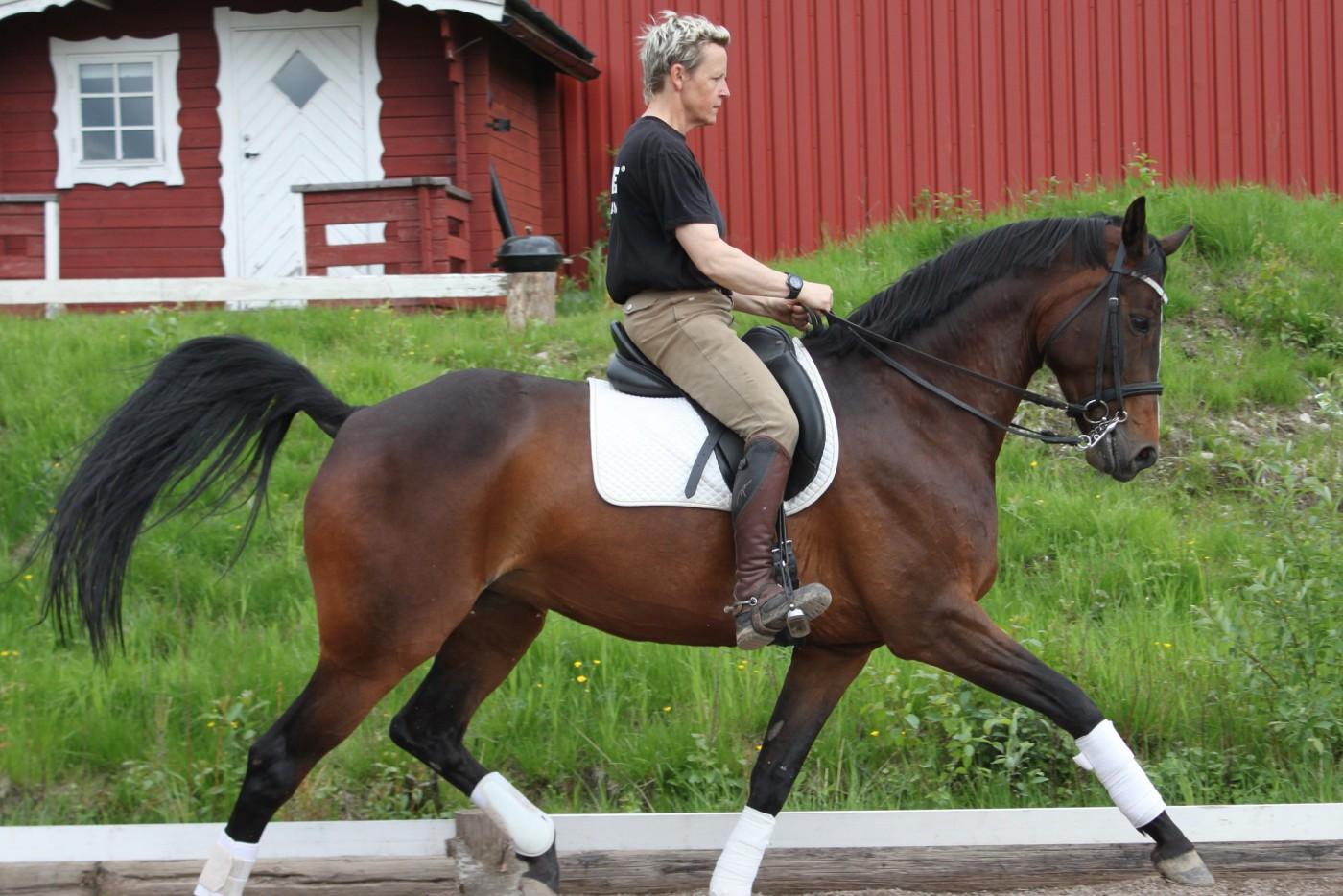 Utbildning och tillridning av hästar